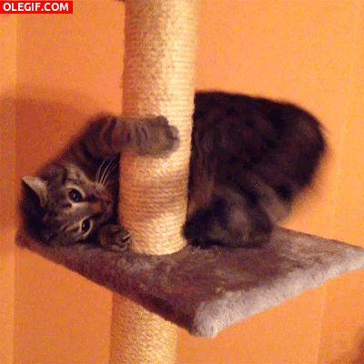 """Too much catnip, too much catnip, too much catnip!"""
