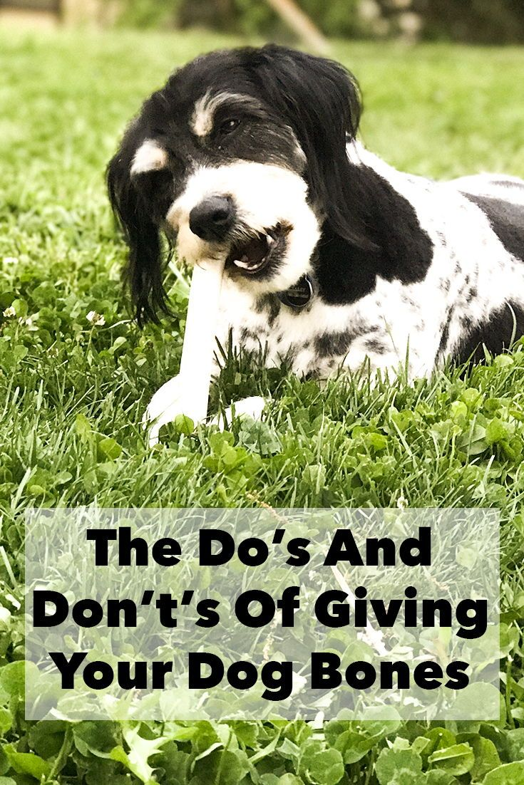 The Do S And Don T S Of Giving Your Dog Bones Dogs Dog Bones