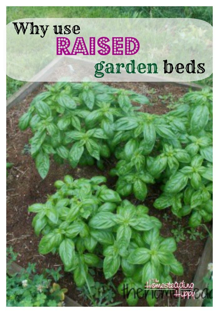 how to stop weeds in raised beds