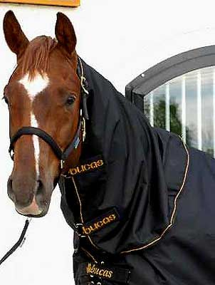 72 Best Horse Rugs Accessories Fly Exercise Lightweight Images On Pinterest Exercises And