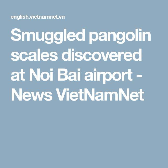 Smuggled pangolin scales discovered at Noi Bai airport - News VietNamNet
