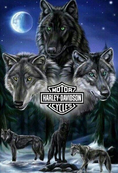 HARLEY DAVIDSON wolves