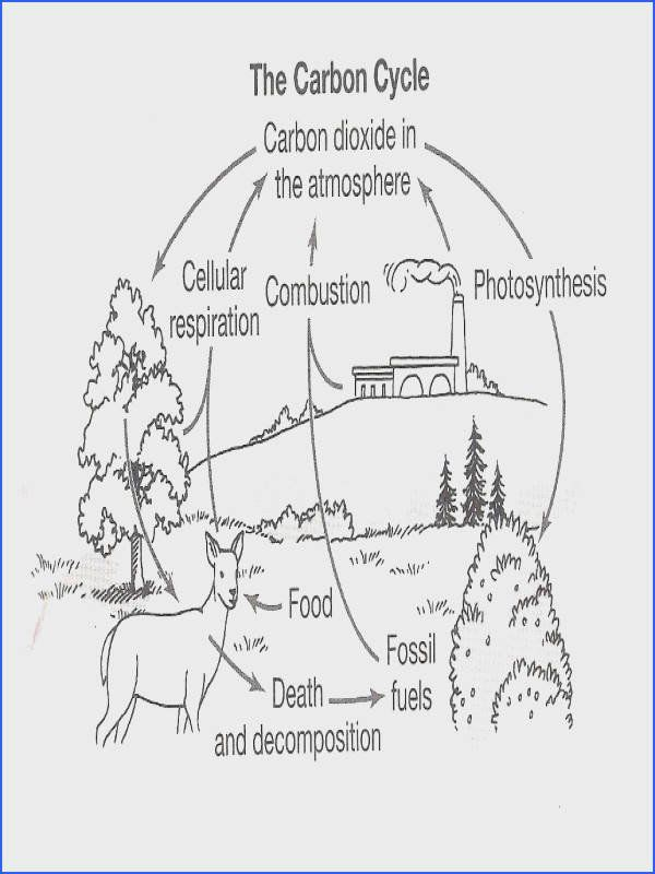 Nutrient Cycles Worksheet Answers Brainpop Carbon Cycle Worksheet Answers In 2020 Carbon Cycle Nitrogen Cycle Carbon Dioxide Cycle