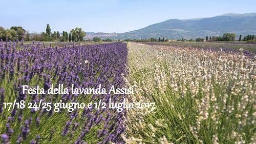 italive.it - 8^ Festa Della Lavanda