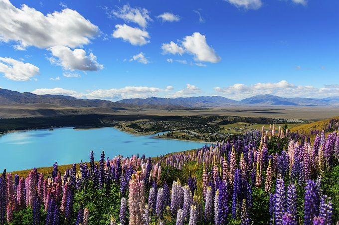 Lago Tekapo, Nuova Zelanda 🌸💕