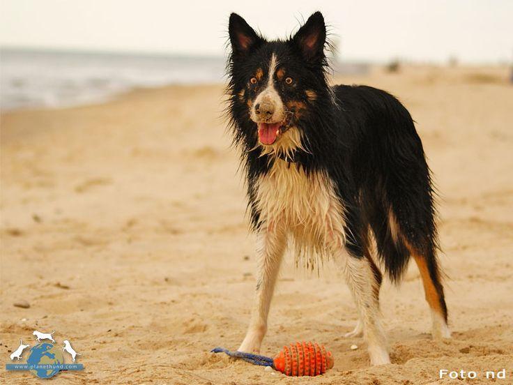Hundestrände in Italien: Informationen über Strände für Hunde und Menschen an der Adria für Urlauber, die Ihren Hund mit in den Urlaub nehmen möchten.