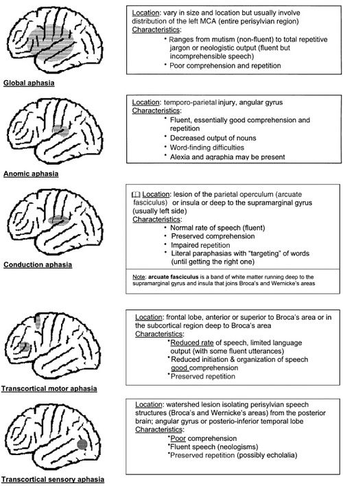 Theotsiproject Aphasia Ot Conditions