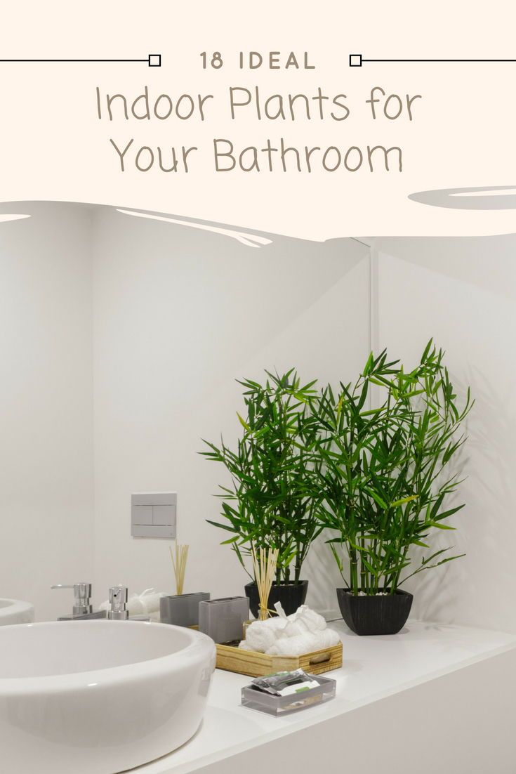 18 Ideal Indoor Plants For Your Bathroom With Images Zen