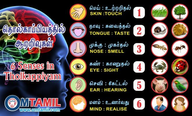 6 Senses in Tolkappiyam http://omtamil.info/6-senses-in ...