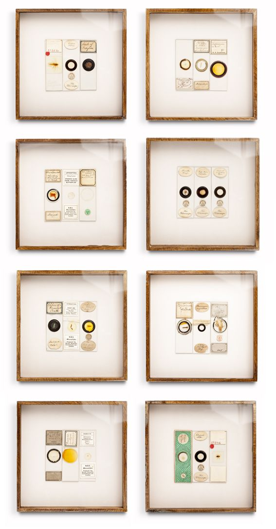 Framed Antique Microscope Slides... Designed by Hannah Brown Interiors. Brilliant Idea and So Very Lovely!!!