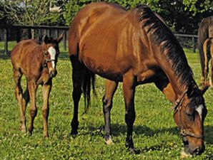 Aurora by Danzig, out of top racemare and broodmare Althea by Alydar (and out of super broodmare Courtly Dee). Stakes winner. Dam of multiple graded stakes/grade 1 winner Acoma and also multiple stakes winner and important sire Arch.