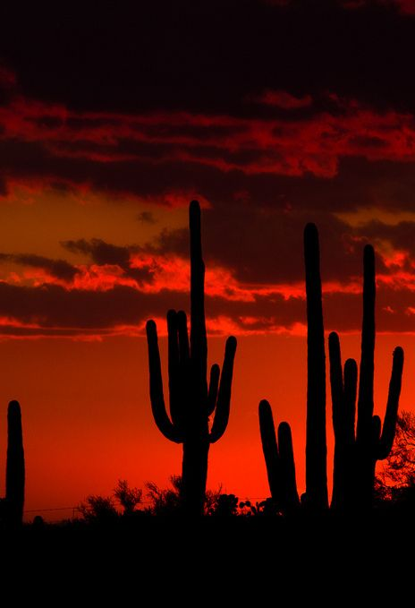^Arizona Saguaro Cacti  :) I remember sunsets like this in Apache Junction.