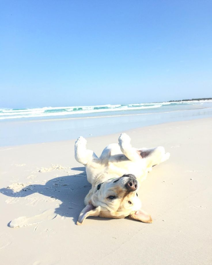 All you need is a dog and a beach! Explore our pet-friendly vacation rentals and plan your Emerald Isle vacation with fido!