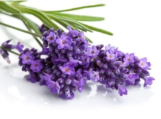 Gyógynövények, amelyeknek minden háztartásban ott a helyük VII. - Manna Webshop
