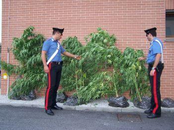 Piante di canapa indiana sul terrazzo di casa, due arresti a Perugia