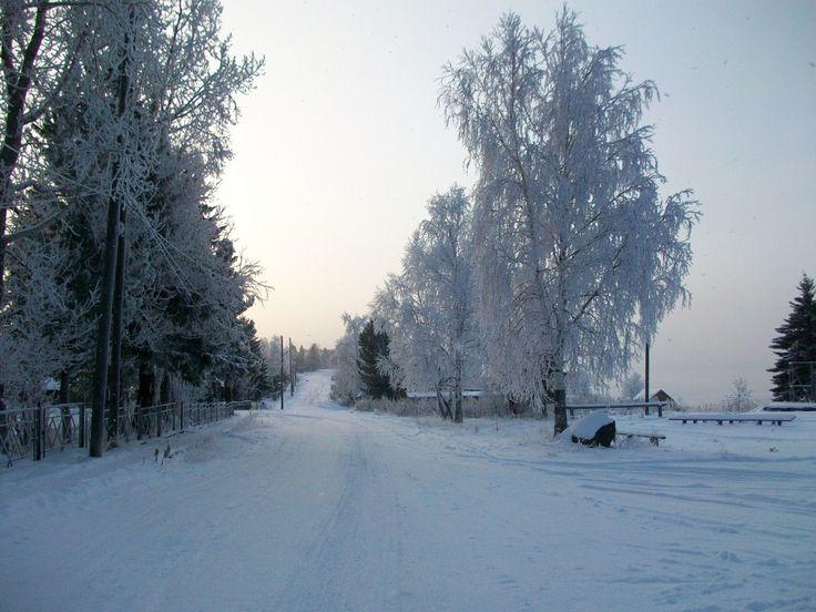 Главная улица нашего села. Енисей замерзает и поэтому все деревья и кусты стоят в красивом убранстве инея.