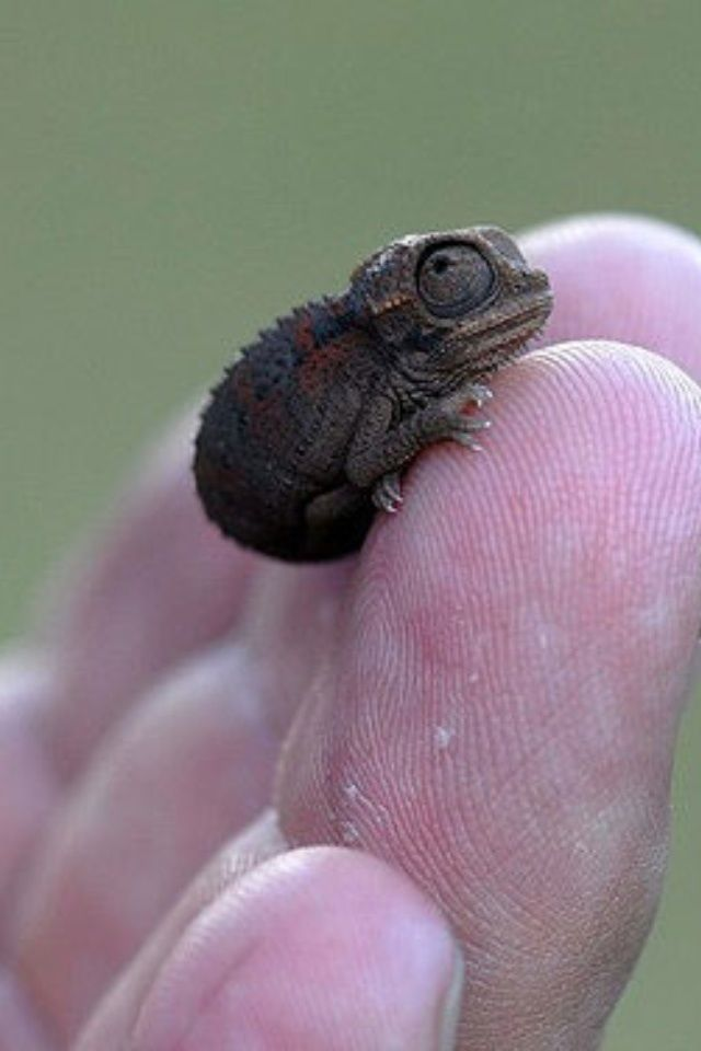 How could a chameleon be cute?  Like this!  He looks scared, poor little cutie-pie!