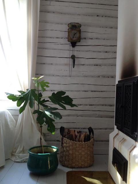les 25 meilleures id es de la cat gorie figuiers d 39 int rieur sur pinterest feuille violon fig. Black Bedroom Furniture Sets. Home Design Ideas