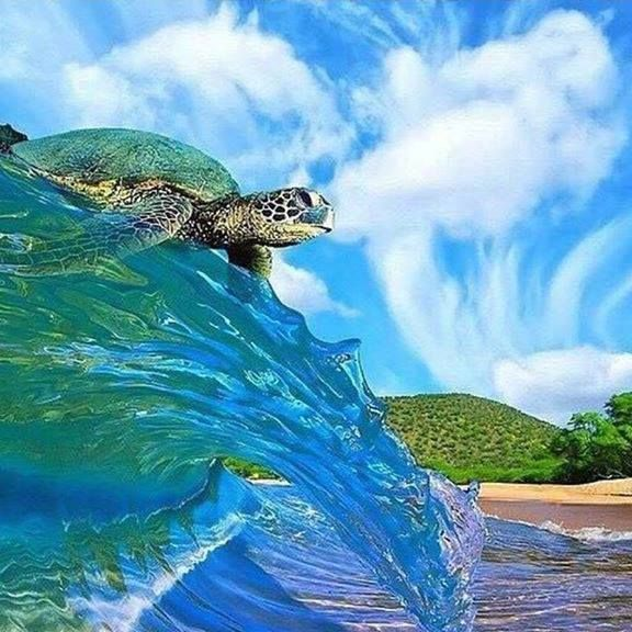Pin by Icy Misfit on Animals Ocean animals, Sea turtle