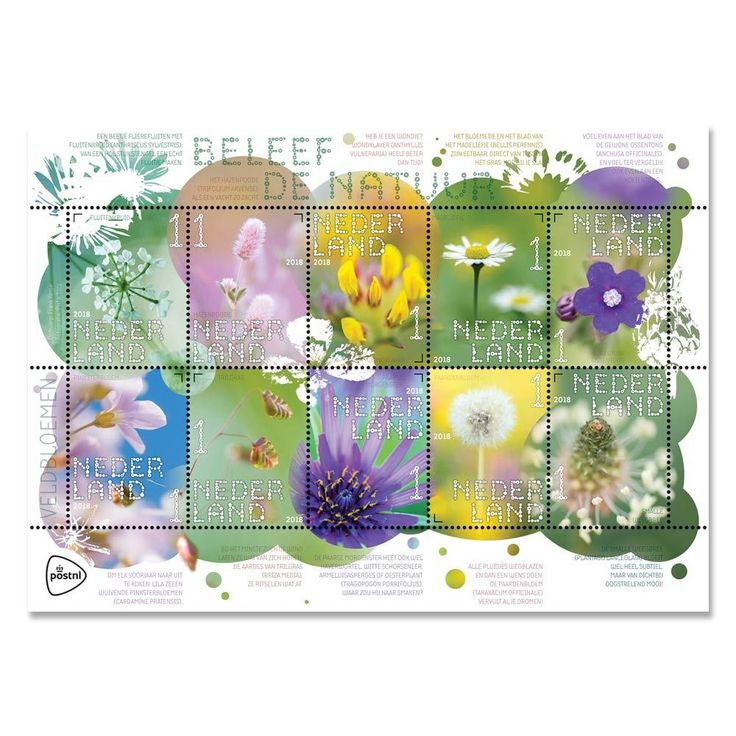 Beleef de natuur - veldbloemen