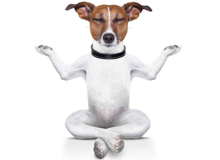 Mon chien est hyperactif, quels remèdes naturels ? Plantes, huiles essentielles et suppléments contre l'hyperactivité du chien.