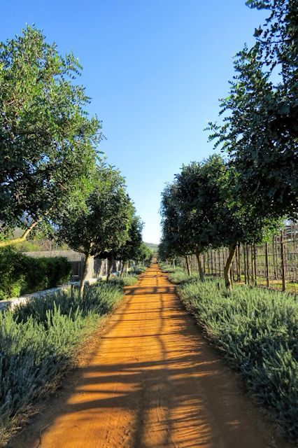 Babylonstoren Farm, Franschhoek, South Africa / Erin Ashley