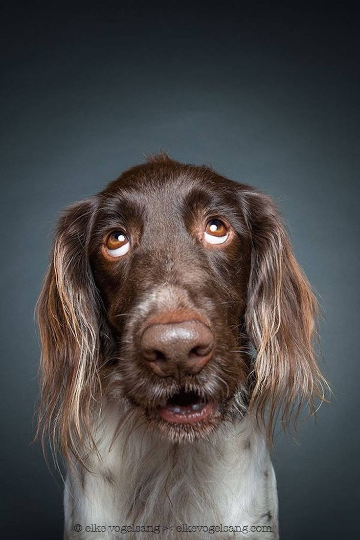 Tender Portraits of Skeptical Dogs – Fubiz Media