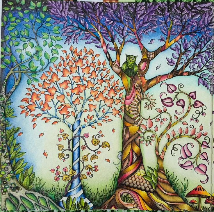 Trees Owl Enchanted Forest Arvores Coruja Floresta Encantada Johanna Basford