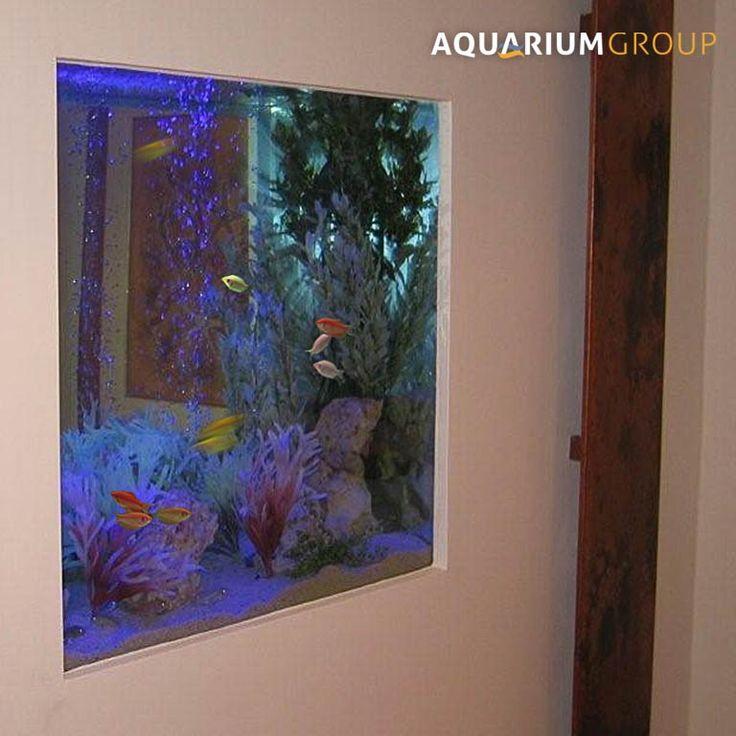 Narrow fish tank for wall google search walls for Fish tank in wall