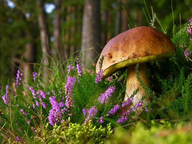love it ~ close-up of mushroom in the forest in Poland ~ Kaszuby to raj dla grzybiarzy / Fot. Shutterstock