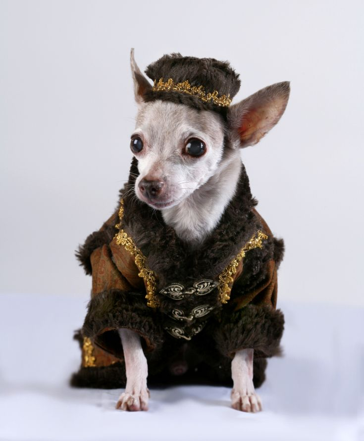 54 best Dogs in Fashion images on Pinterest | Doggies ...