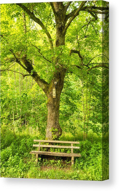 Bench and green tree in spring Canvas Print for sale, peaceful and tranquil nature. Naturpark Schönbuch (Nature Park Schoenbuch), Germany. The image gets printed on one of our premium canvases and then stretched on a wooden frame, click through and check out your options. 30 days money back guarantee. Matthias Hauser - Art for your Home Decor and Interior Design.