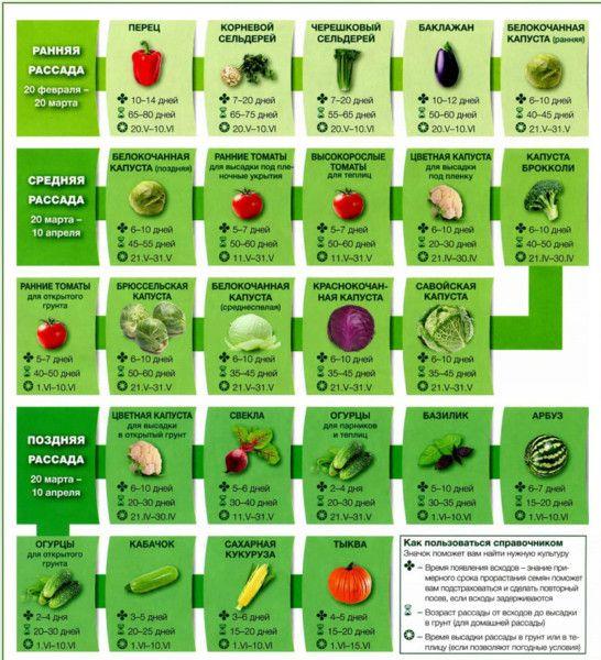 Что сажать на рассаду в марте 2018 года. Календарь посадки цветов и овощей