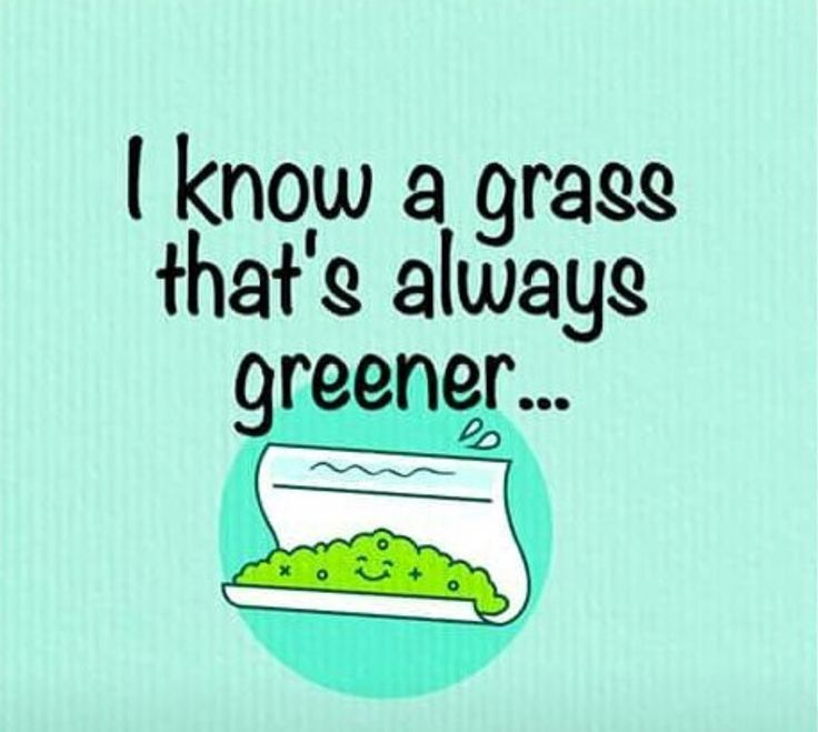 RT @mzstoned: I know a grass that's always greener http://pic.twitter.com/kiDGxIDe1O?utm_content=buffer81f17&utm_medium=social&utm_source=pinterest.com&utm_campaign=buffer