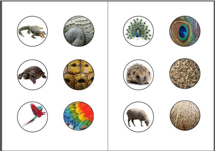 Voici notre jeu d'association des animaux avec leur pelage (ou autre) à télécharger en PDF