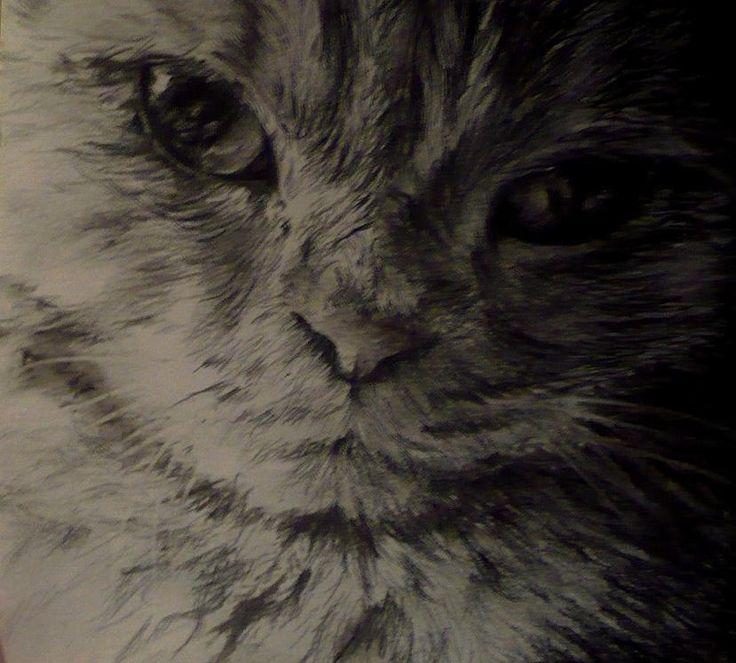 Gattino. In matita e carboncino. tempo: 2 ore