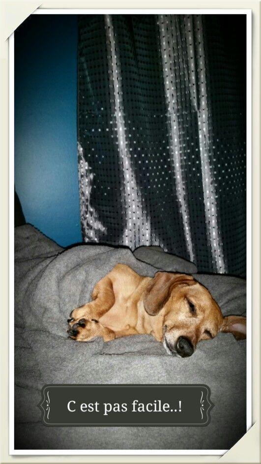 La vie de chien !!!!