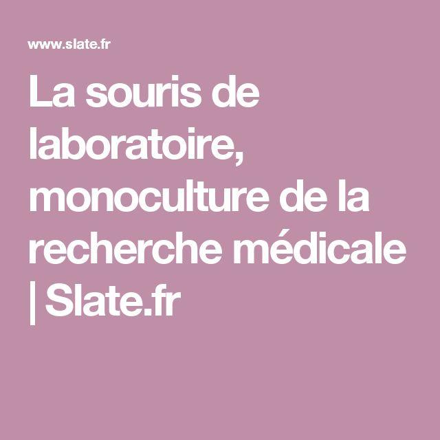La souris de laboratoire, monoculture de la recherche médicale   Slate.fr
