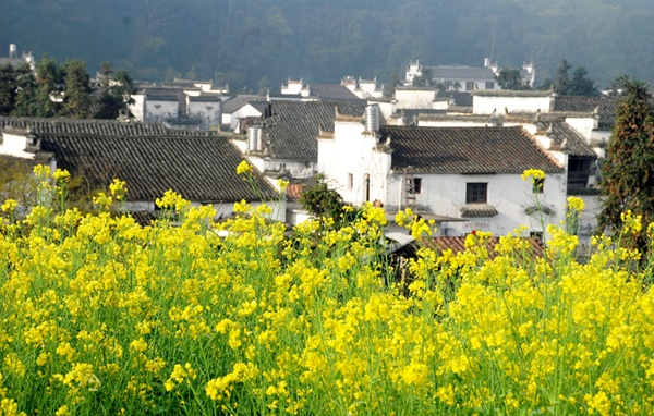 Wuyuan, located in Jiangxi, China, has a magnificent landscape dotted with strange caves, deep secluded rocks and numerous historic sites.