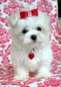 36 Best Dog S In Clothes Images On Pinterest Cute Dogs
