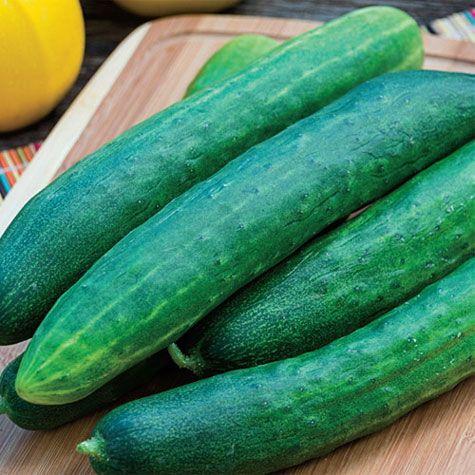 Garden Sweet Burpless Hybrid Cucumber