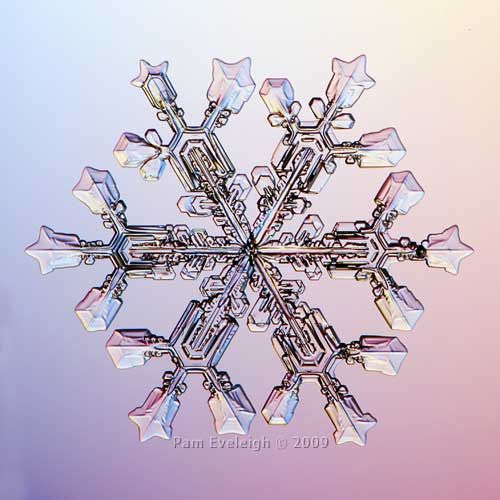 Embodying both an ideal symmetry and the reality of asymmetry, snow flakes could provide me with a nice, imperfect metaphor for math and people.