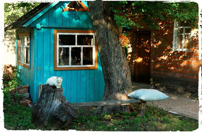 Rural Russia. #poetry #freeimages #freepictures #freephotos #haiku #rural #russia #ruraltourism #agritourism #ecotourism #cat #cats #catphotography #village