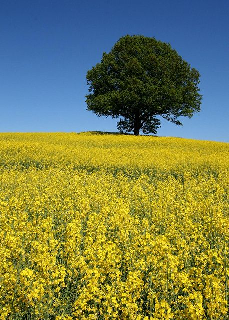 blue green yellow by herefordcat, via Flickr