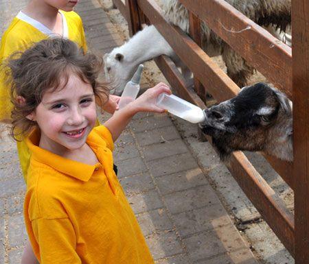 White Post Farms Animal Farm and Petting Zoo, Melville NY: Long Island