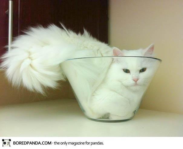 IdeaFixa » A prova de que os gatos são líquidos