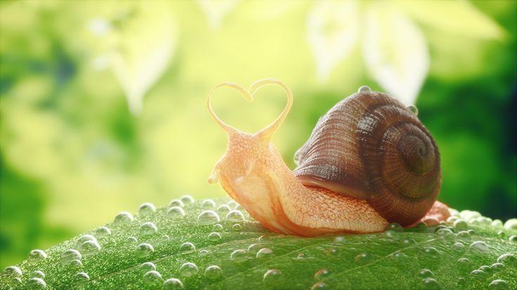 Snail on Behance