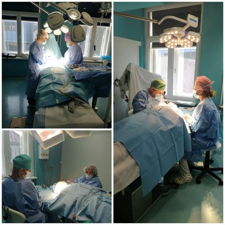 🏪Naši lekári boli dnes v plnom nasadení na všetkých operačných sálach 😎👌. Na fotografiách vidíte MUDr. Hudákovú pri rhinoplastike, MUDr. Potockú pri faceliftingu a MUDr. Turkina pri operácii viečok. Prajeme Vám úspešný a pozitívny týždeň✔. 🌟Vaše GÉVÉ🌟 #rhinoplasty #facelift #augmentation #beauty #newbody #newlife #selfconfidence #plasticsurgery #Kosice