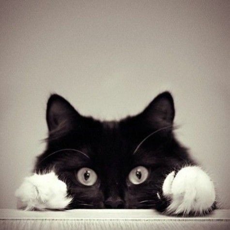 Socks: Kitty Cats, Animals, Kitten, Black Cats, Pets, Kitty Kitty, Peekaboo, Peek A Boo, Eye