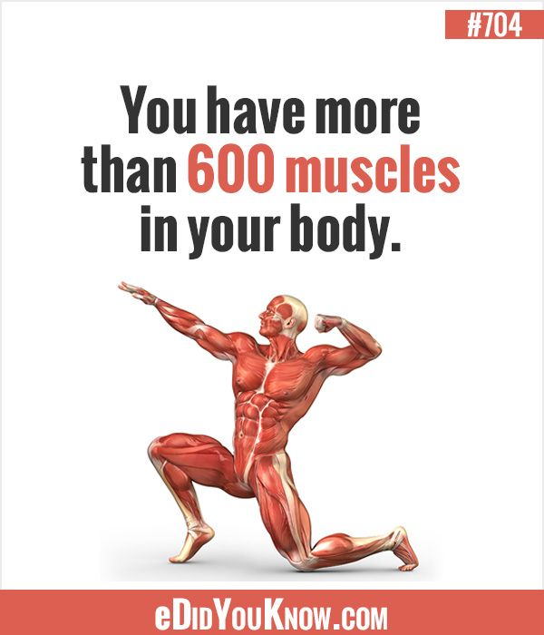 303 best human body images on pinterest | random facts, Muscles